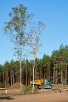 clearing of a forest near Dolle in Germany for the construction of the A14 motorway