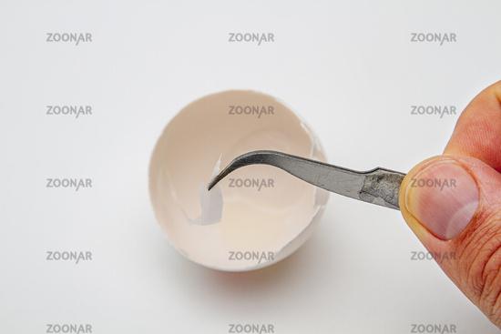 Peeling the skin of an egg