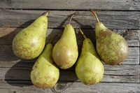 Pyrus communis Conference, Pear