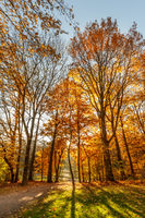 golden trees in fall