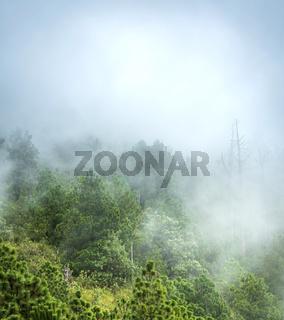 Guatemala Forest Landscape On Acatenango Volcano