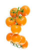 Fresh orange tomatoes  in water drops on a white background with reflection