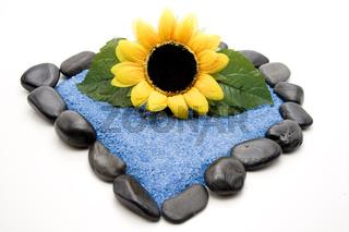 Sonnenblume mit blauem Sand