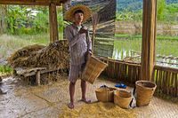 Young man showing baskets for storage and transportation of rice, near Luang Prabang, Laos