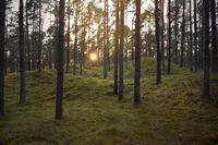 Baltic Sea coast forest 2