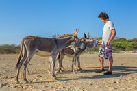 Young european man feeds group of donkeys