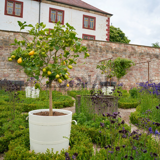 Garten des Schlosses Wilhelmsburg