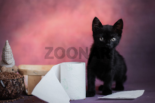 black kitten on a dark abstract background close-up with toilet paper. Halloween.