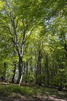 Forest Nature Park Jasmund