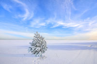 Little lonely fir tree with snow and hoarfrost covered in snowy field