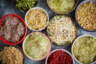 Top view of various kinds microgreens sprouts in colorful bowls. Shoots of radish, cabbage, garlic
