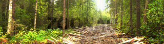 Logging Road in swampy area lined with waste from sawmill