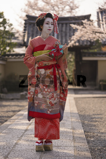 Maiko in a kimono walking on a stone path in front of the gate of a traditional Japanese temple surrounded by cherry blossoms in sunset.