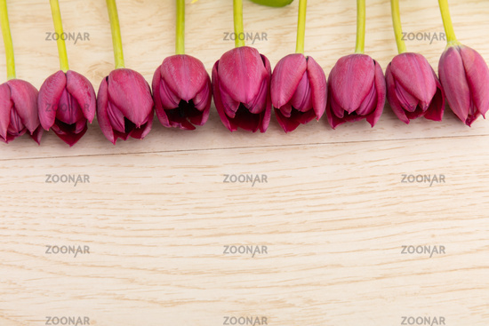 Pink tulips in a row at the top on wooden background