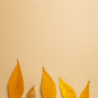 Autumn dry leaves on brown background. flat lay, top view, copy space