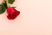 Red rose in top left corner on pink background