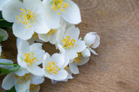 White jasmine flowers, traditional green tea ingredient, aromatherapy flavor