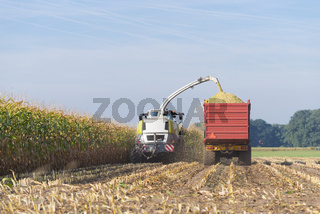 harvesting corn in the netherlands
