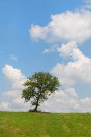 Summer tree in landscape
