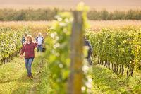 Erntehelfer im Weinberg zwischen Weinstöcken