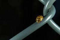 The 22-spot ladybird