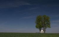 Chapel between trees