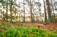 Mushroom in a German forest