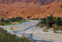 river between palm trees in the desert
