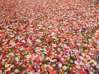 Autumn  leaves on lawn