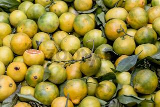 Gelbe reife sizilianische Zirtrusfrüchte auf einem  lokalen Markt verkauft