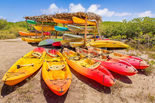 Group of kayaks parked in mangrove forest