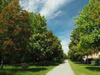 Chestnut alley with red and white flowering trees