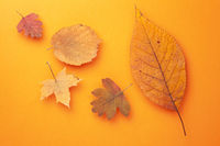 Autumn Leaves Composition On Orange Paper Background