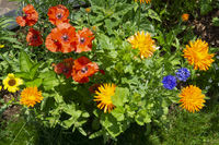 Colorful flowers at the garden