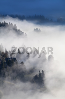 alpine forest and meadows in sunrise fog