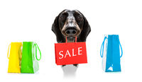 sale shopping dog