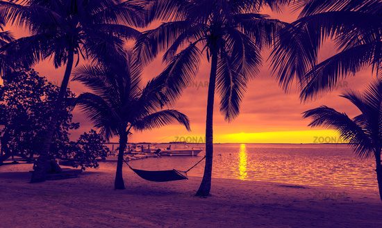 palm trees and hammock on tropical beach