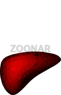 Abstract polygonal vector image of the liver