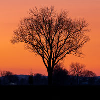 Tree in front of a burning sky at sunset