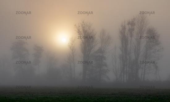 Foggy sunrise at Paar river near Schrobenhausen, Bavaria, Germany in autumn
