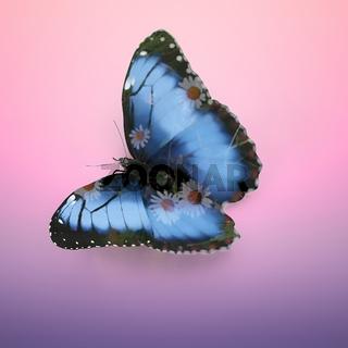 Butterfly Morpho didius. 3D rendering, double exposure effect