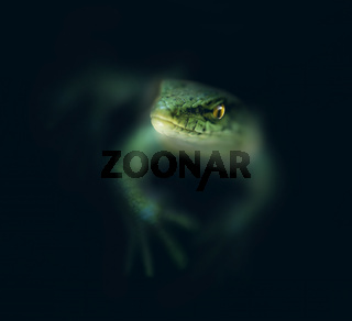Lizard in the dark