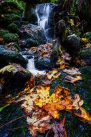 Small Waterfall and Autumn Maple Leaves, Northern California
