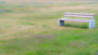 Bench on a green meadow with blur