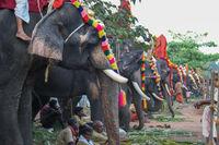 Elephant Parade in Varkala, India