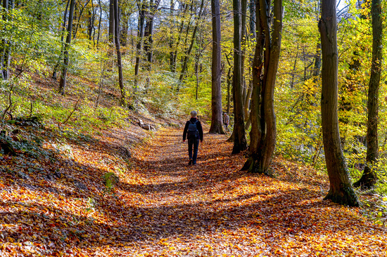 Hiker in the autumn forest