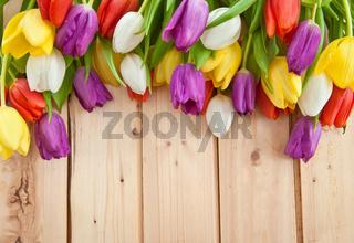 Frische Tulpen auf Holzhintergrund