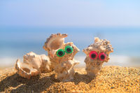 Funny shells at the beach