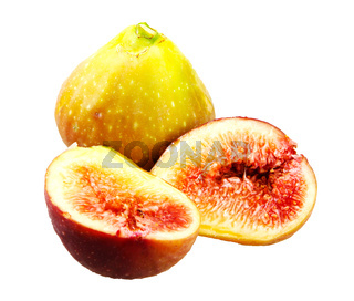 Common fig on white background. Ficus carica is an Asian species of flowering plant in the mulberry family, known as the common fig