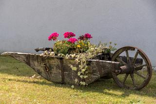 historische Holzschubkarre als bepflanzte Gartendekoration